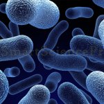 Classification of Microorganisms Naturally