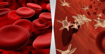 4 Components of Blood With Functions