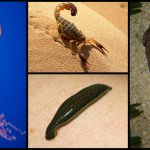 Main 4 Types of Invertebrates Explained