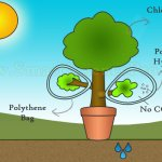 Factors of Photosynthesis Process by 4 Scientific Tests