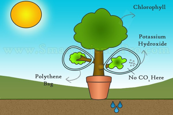 Factors of Photosynthesis - Carbon Dioxide Test