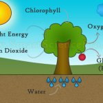 Photosynthesis, The Life Originator Of Earth