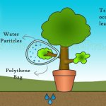 Transpiration, Interesting Mechanism of Plants