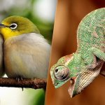 Vertebrates, The Classification of Animals
