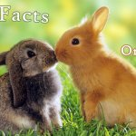 19 Science Facts About Living Organisms